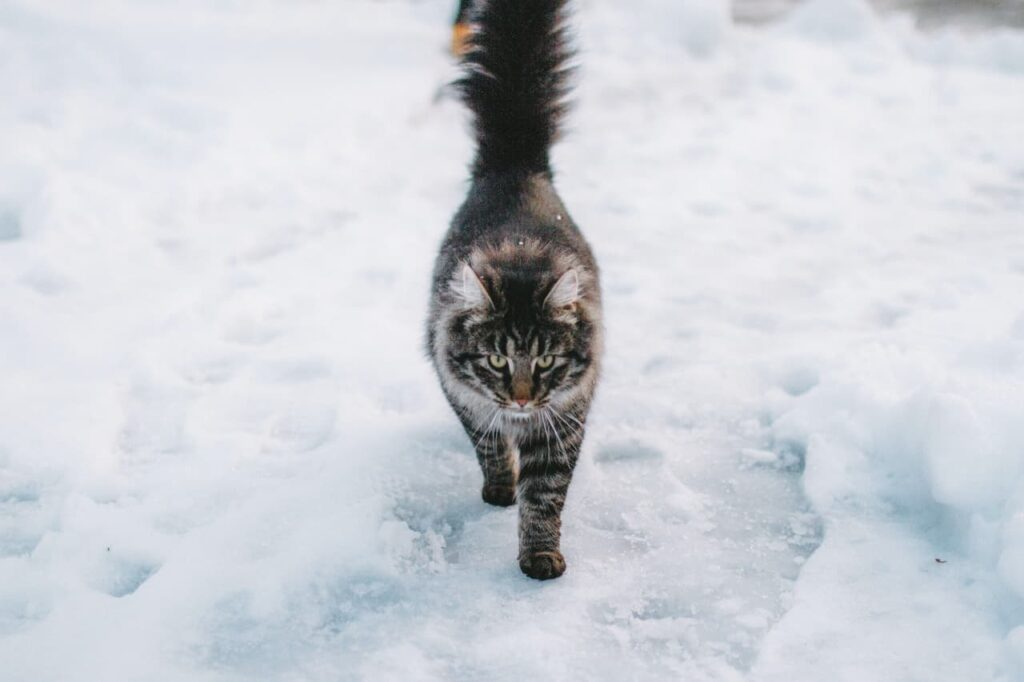 stimuler chat hiver