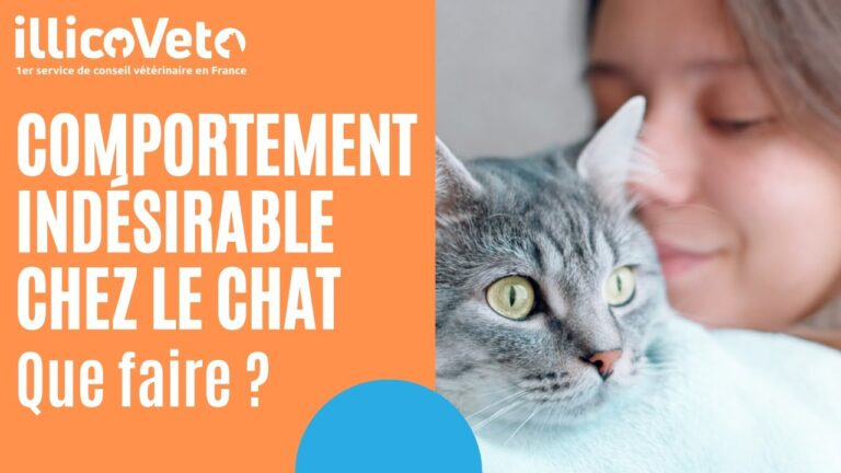 Comportement indésirable chez le chat : que faire ?